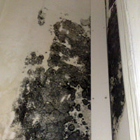 Condensation Control and Solutions in London SW